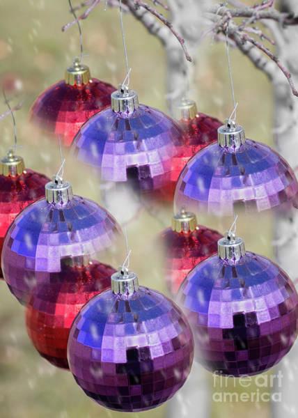 Photograph - Magical Christmas by Susan Warren