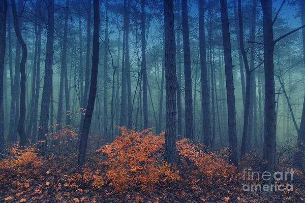 Freshness Wall Art - Photograph - Magical Foggy Seasonal Forest Tree by Babaroga