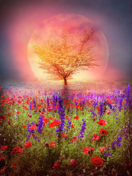 Photograph - Magical Moon In The Poppies by Debra and Dave Vanderlaan