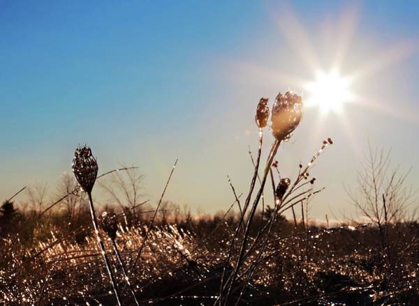Photograph - Magical Star Of Light And Ice by Tatiana Travelways