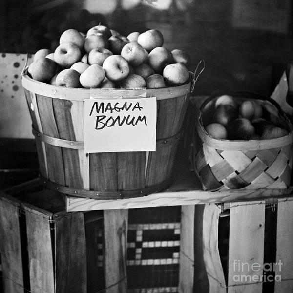 Photograph - Magna Bonum by Patrick M Lynch