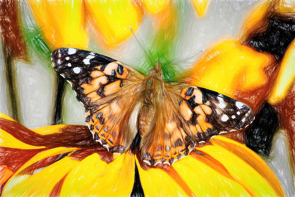 Photograph - Magnificent Painted Lady Butterfly by Don Northup