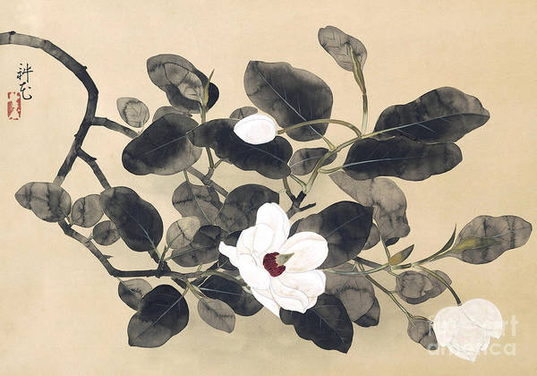 Wall Art - Drawing - Magnolia Branch, Hanging Scroll by Yamamura Koka  Toyonari