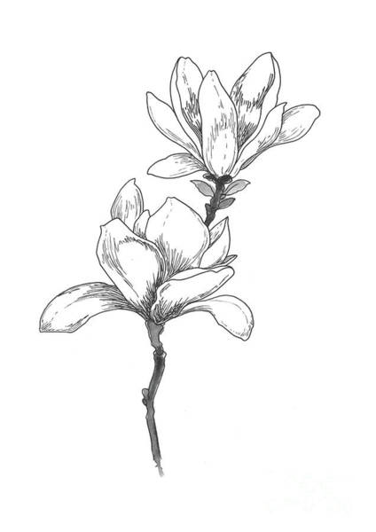 Wall Art - Painting - Magnolia Flower Contour Black Ink Blossom Motive by Joanna Szmerdt