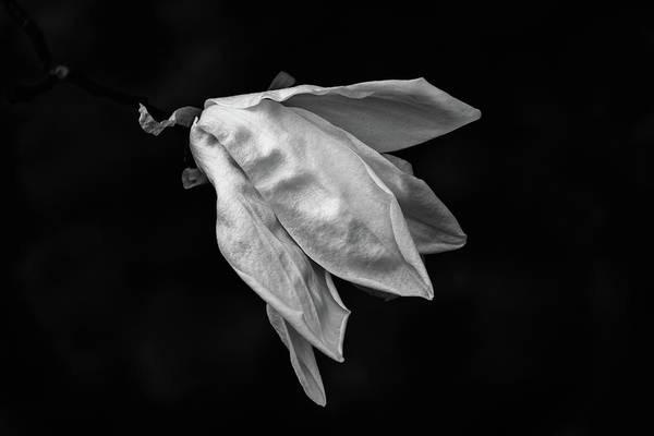 Photograph - Magnolia Flower by Marzena Grabczynska Lorenc