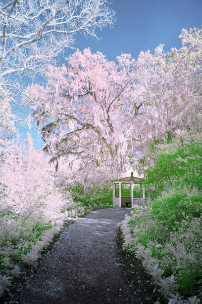 Photograph - Magnolia Gazebo  by Jon Glaser