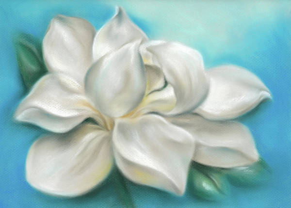 Pastel - Magnolia Grandiflora Flower On Blue by MM Anderson