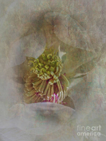 Photograph - Magnolia by Judy Hall-Folde