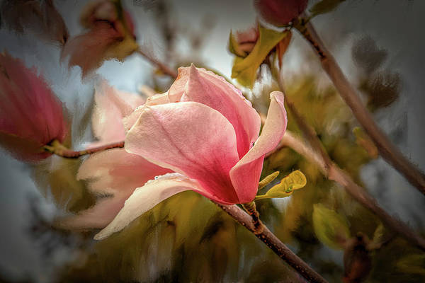 Mixed Media - Magnolia Light #i7 by Leif Sohlman