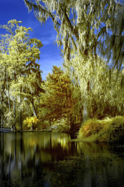 Wall Art - Photograph - Magnolia Plantation Trees by Jon Glaser