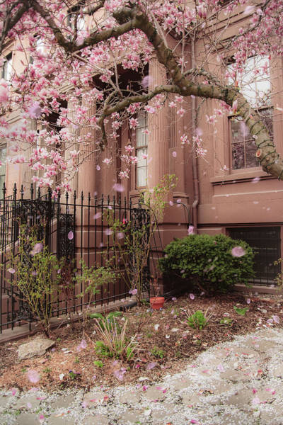 Photograph - Magnolia Spring - Back Bay Boston by Joann Vitali