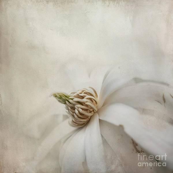 Wall Art - Mixed Media - Magnolia Stellata by Eva Lechner