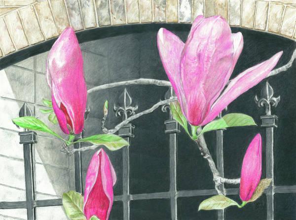 Garden Wall Drawing - Magnolias In Spring by Akosua Sankofa