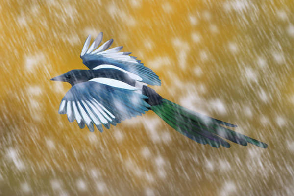 Digital Art - Magpie In Autumn Snow by Mark Miller