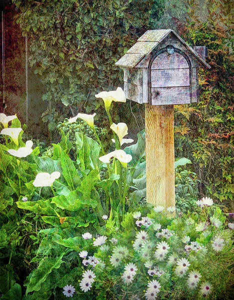 Photograph - Mailbox In The Daises  by Floyd Snyder