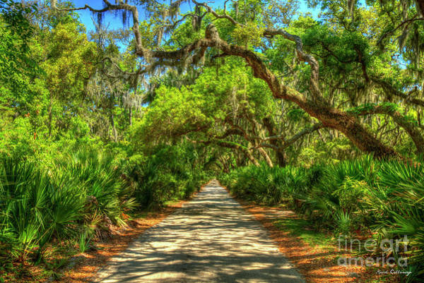 Wall Art - Photograph - Majestic Main Road Shadows Cumberland Island National Seashore Georgia Landscape Art by Reid Callaway
