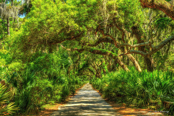 Wall Art - Photograph - Main Road Too Cumberland Island National Seashore Georgia Landscape Art by Reid Callaway