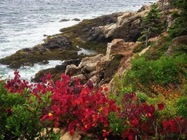 Photograph - Maine Coastline by Walt Sterneman