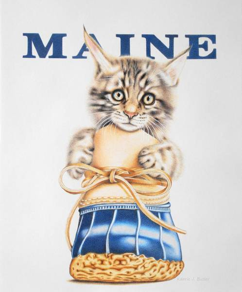 Drawing - Maine Coon Kitten by Karrie J Butler