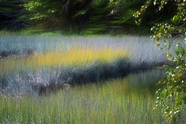 Photograph - Maine Marsh by Tom Singleton