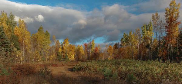Photograph - Maine Wilderness Color 2 by Rick Hartigan