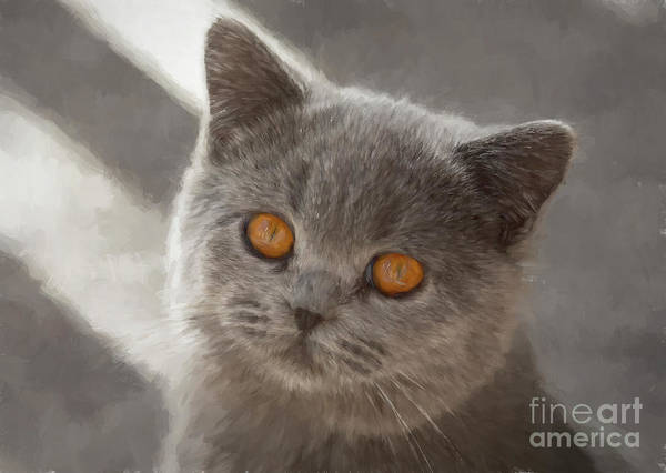 Wall Art - Photograph - Maisie by Sheila Smart Fine Art Photography