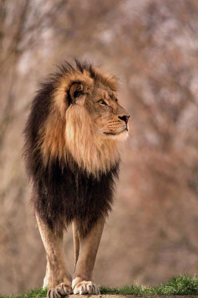 Photograph - Majestic by Don Johnson