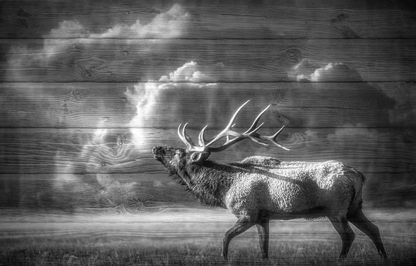 Wall Art - Digital Art - Majestic Elk In Black And White by Debra and Dave Vanderlaan
