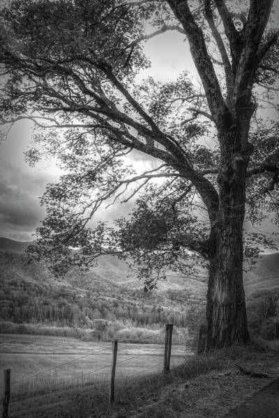 Photograph - Majestic In Black And White by Debra and Dave Vanderlaan