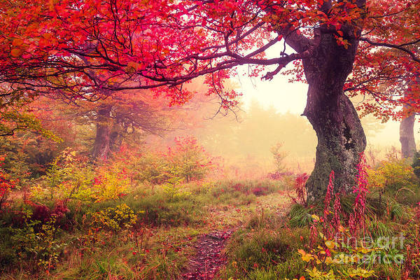 Wall Art - Photograph - Majestic Landscape With Autumn Trees In by Creative Travel Projects