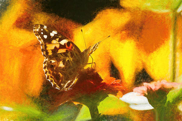 Photograph - Majestic Painted Lady Butterfly by Don Northup