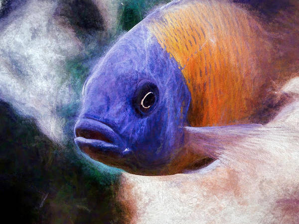 Digital Art - Majestic Red Fin Borleyi Cichlid by Don Northup