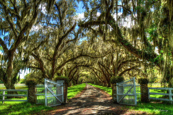 Photograph - Majestic Shadows Tomotley Plantation Live Oak Trees Lowcountry South Carolina Landscape Art by Reid Callaway