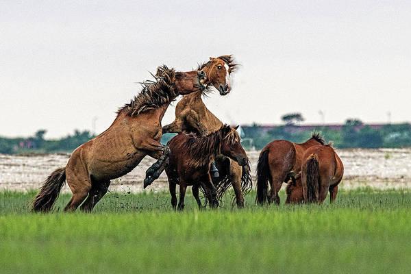 Photograph - Major Fight Break Out by Dan Friend