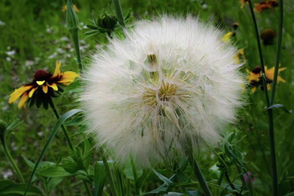 Photograph - Make A Wish by Lora J Wilson