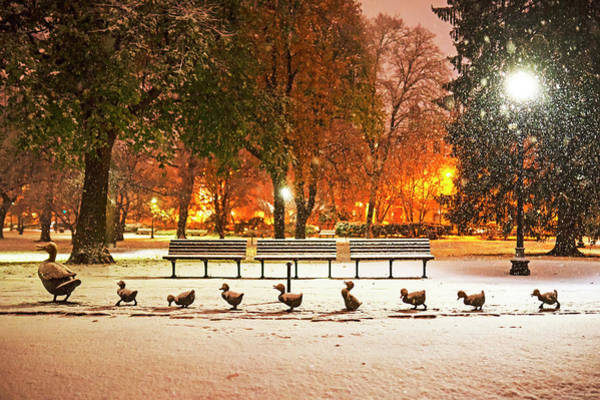 Photograph - Make Way For Ducklings In The Snow Boston Common Boston Ma by Toby McGuire