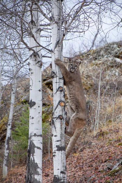 Photograph - Making The Climb 6352 by Teresa Wilson