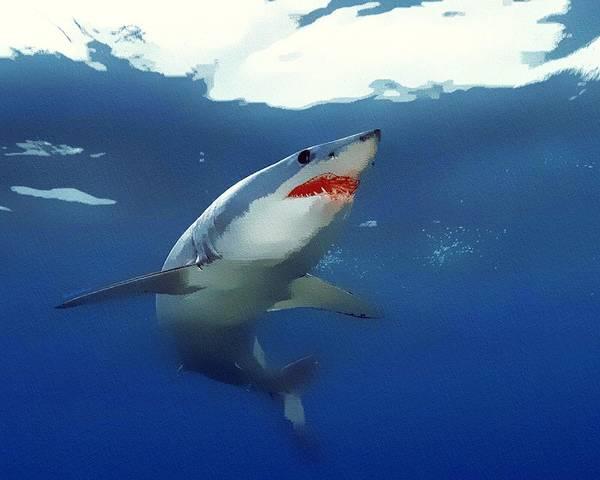 Wall Art - Digital Art - Mako Shark Portrait by Scott Wallace Digital Designs
