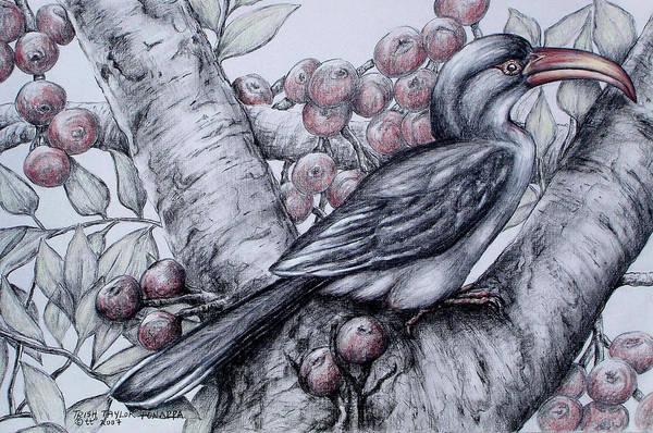 Hornbill Drawing - Malabar Gray Hornbill by Trish Taylor Ponappa