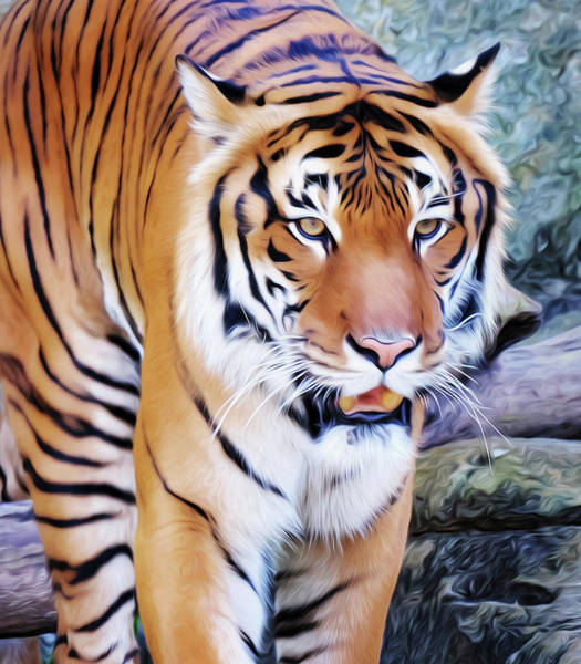Photograph - Malayan Tiger Oil Paint 071519 by Rospotte Photography