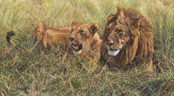 Painting - Male Lion And Lioness Resting In The Grass by Alan M Hunt
