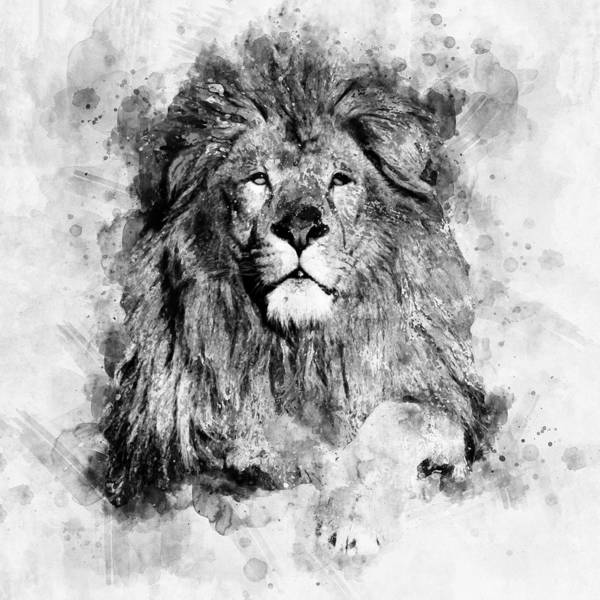 Black And White Lion Paintings | Fine Art America