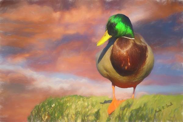 Digital Art - Male Mallard Standing On A Rock. by Rusty R Smith