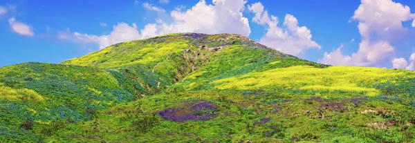 Photograph - Malibu's Amazing Superbloom Landscape by Lynn Bauer