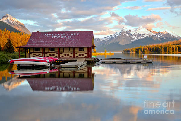 Photograph - Maligne Lake Golden Pines by Adam Jewell