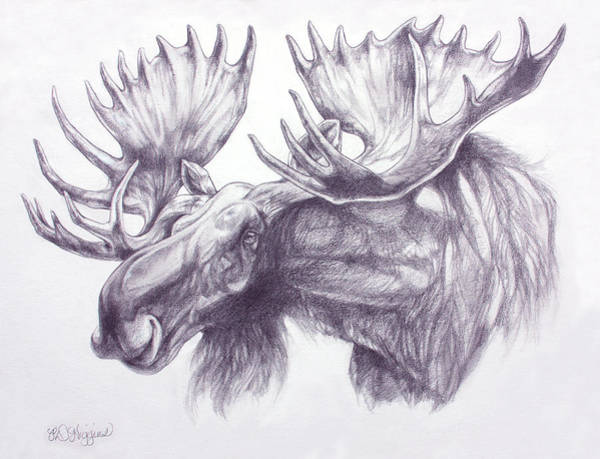 Antlers Drawing - Maligne Lake Moose by Derrick Higgins