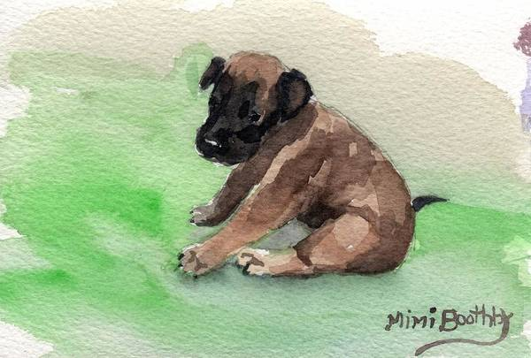 Painting - Malinois Pup 3 by Mimi Boothby