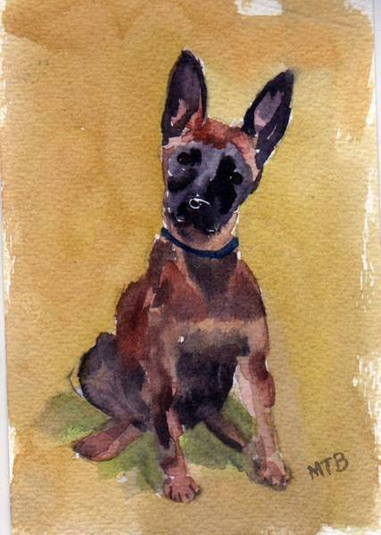 Painting - Malinois Pup by Mimi Boothby
