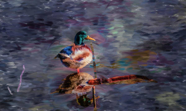 Digital Art - Mallard Reflection Artistic #i0 by Leif Sohlman