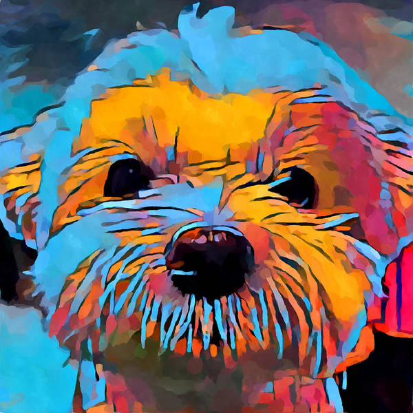 Wall Art - Painting - Maltese 2 by Chris Butler